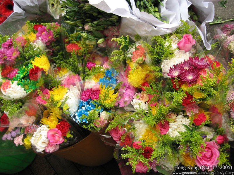 herbal flower hd photographs