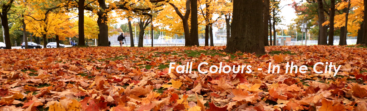 Fall Colours - In the City