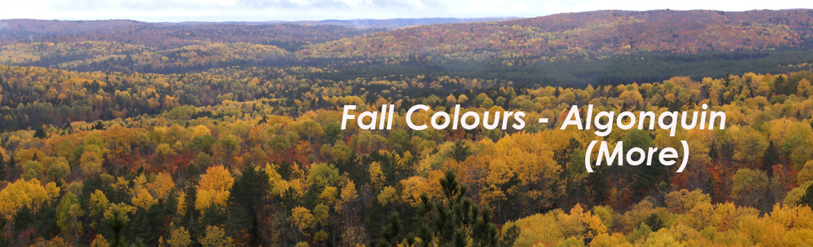 Fall Colours - More Algonquin Park