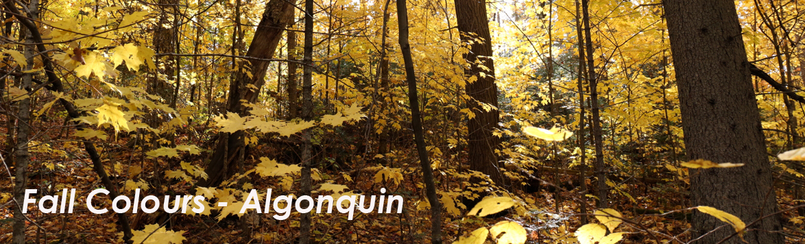 Fall Colours - Algonquin Park