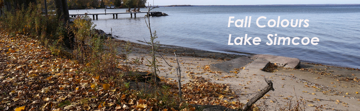 Fall Colours - Lake Simcoe